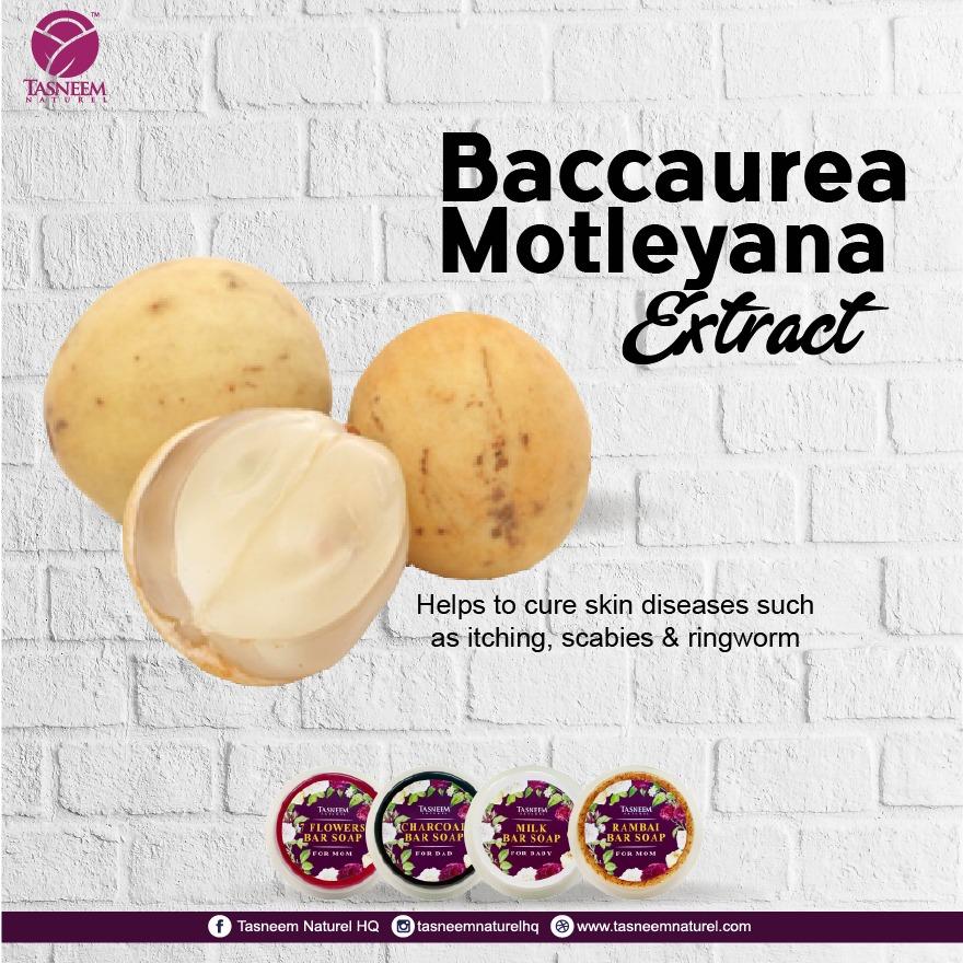 baccaurea.jpg
