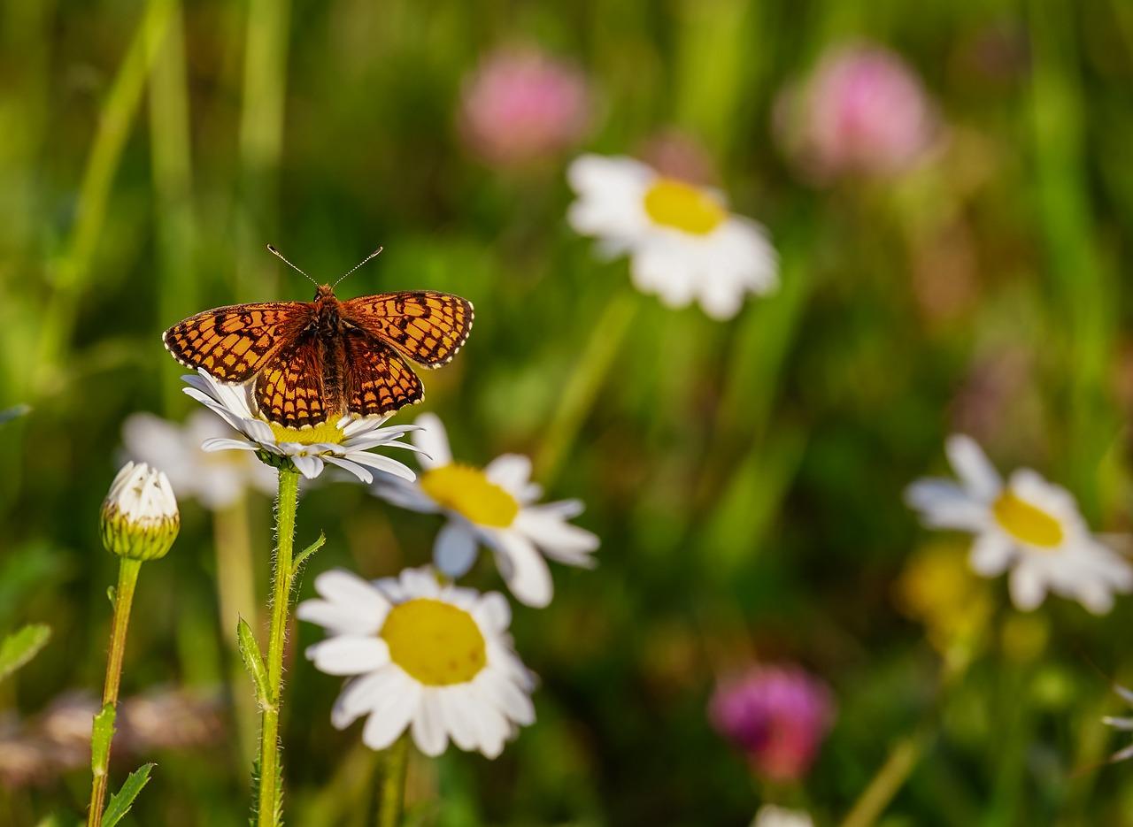 butterfly-3418535_1280
